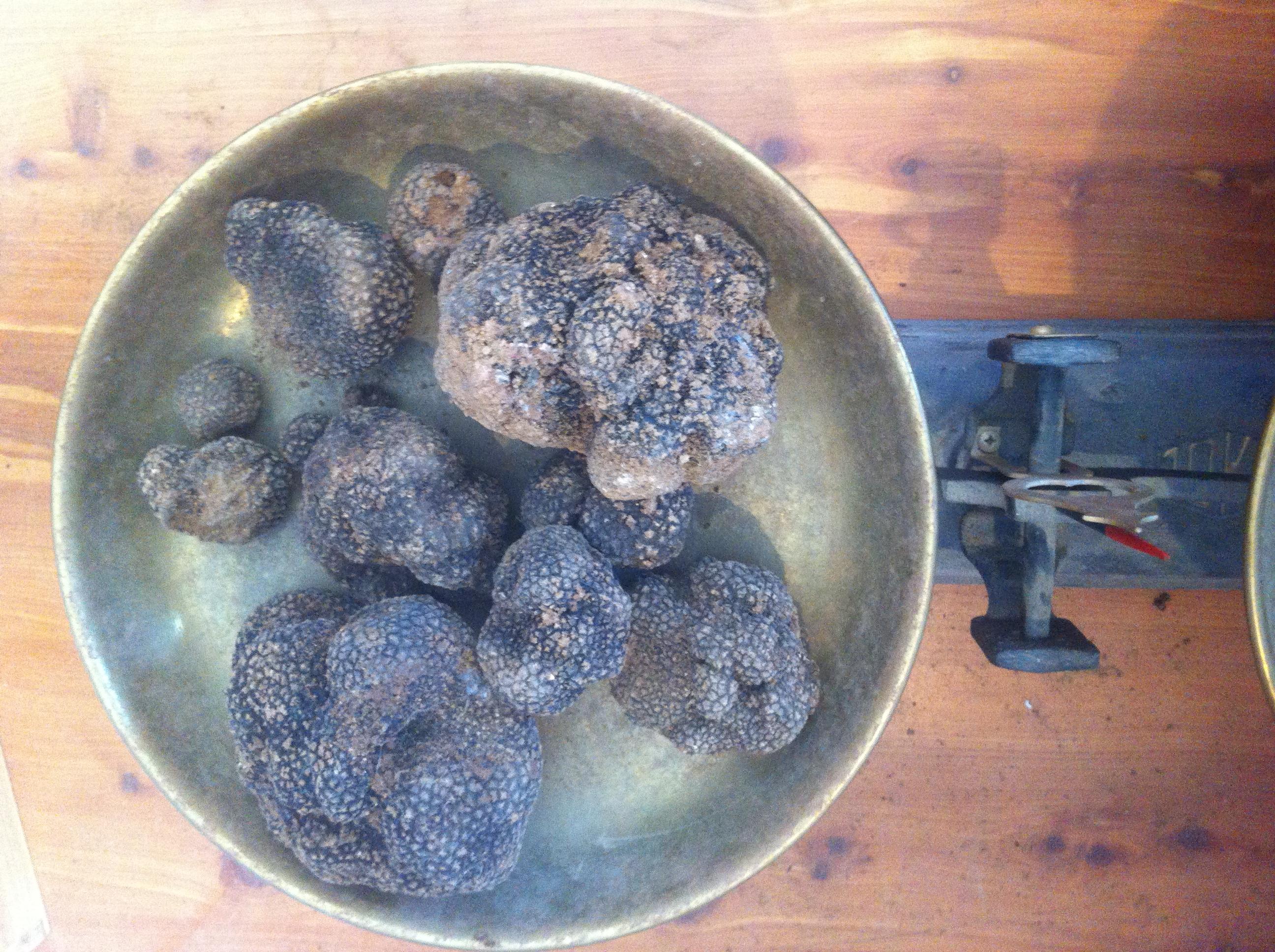 La Trufa Negra se caza, se come y se duerme – Tuber Melanosporum #trufiturismo, Mario Schumacher Blog