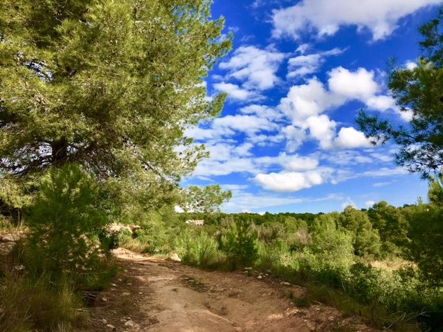 In 1er Stunde über Stock und Stein – Wandern in Calpe (Spanien), Mario Schumacher Blog