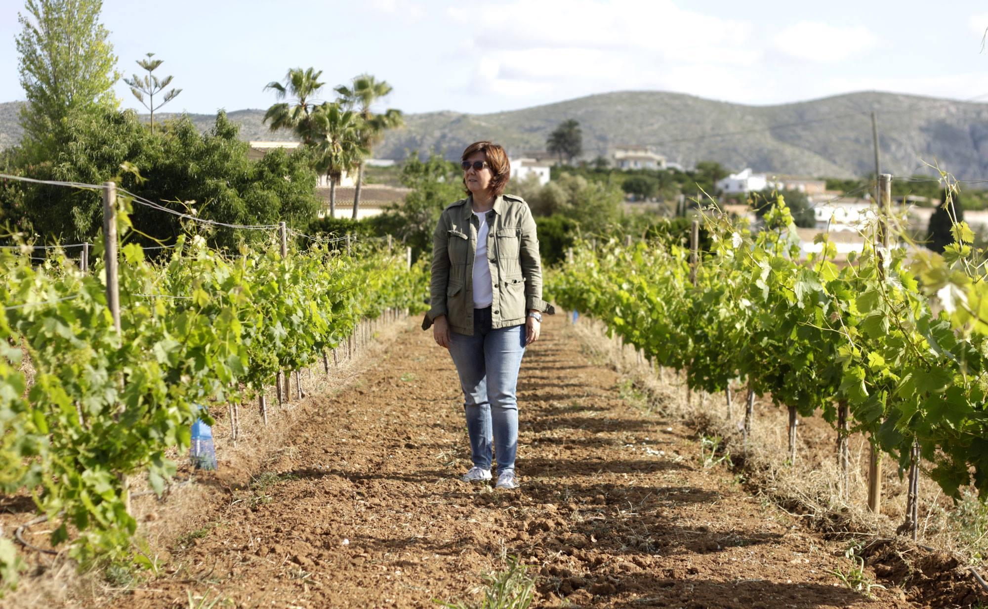 """Eiswein an der Costa Blanca in Spanien??? … Die Geschichte von """"M de Alejandria"""" aus Teulada, Mario Schumacher Blog"""