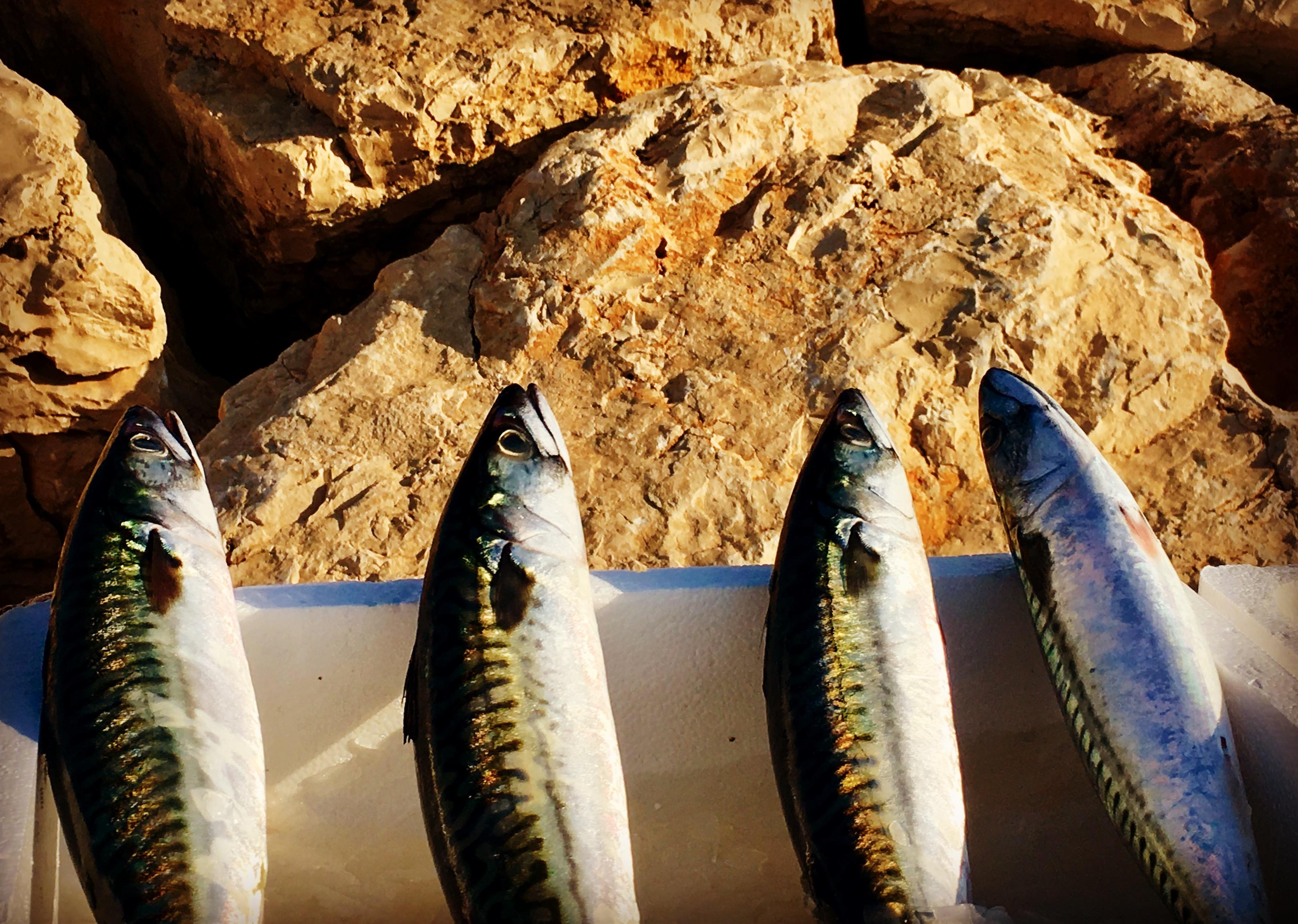 Gourmet Race Moraira 2018 - Sport und Kochen mit der Makrele